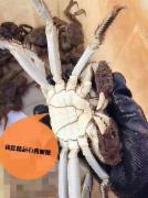 【畅销】珍珍精品蟹5对(4.5两公/3.5两母)礼盒装